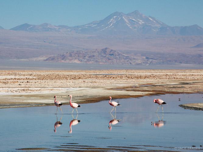 Laguna Chaxa Antofagasta, Chile