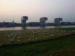 Una vista di alcuni edifici a Colonia